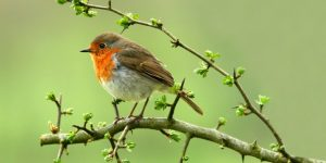 post-top-bird-on-branch